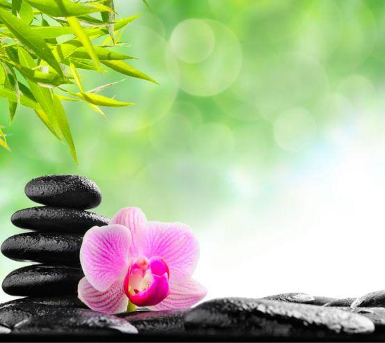 Фотообои Орхидея, зелень, камни 5953