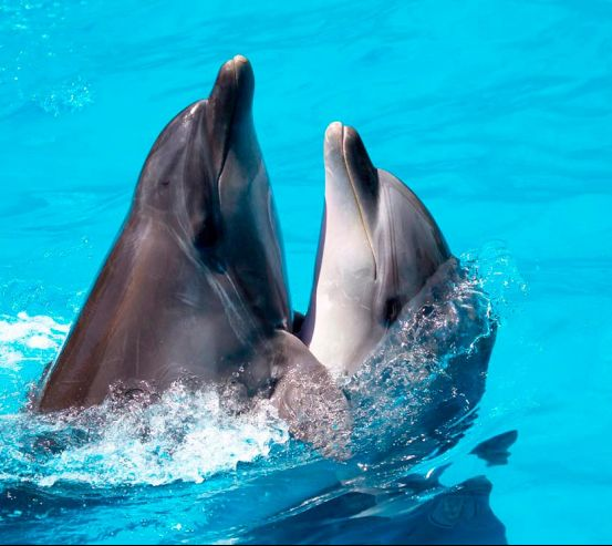 Фотообои Два дельфина 8478