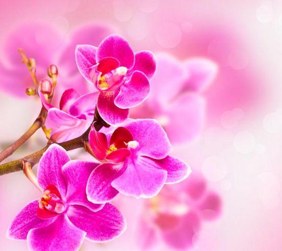 Фотообои Орхидея 18655