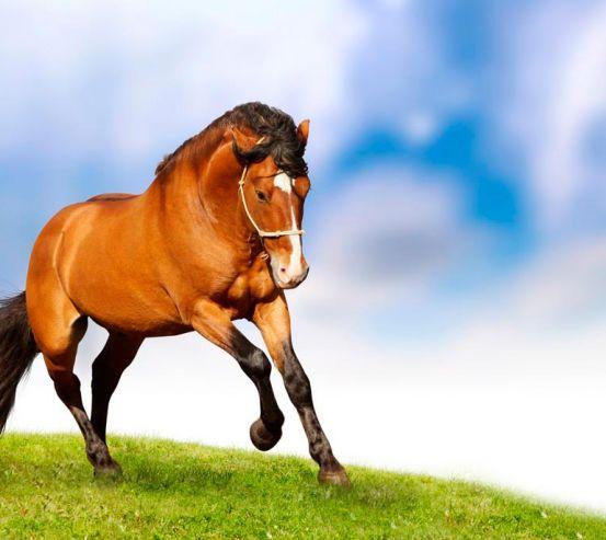 Фотообои Гарцующий конь 0463