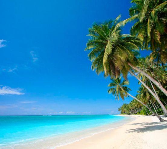 Фотообои Солнце, пальмы, пляж 2561