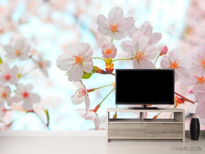 Фотообои Цветет абрикос весной - 2