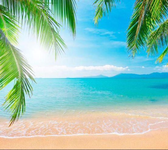 Фотообои Пальмы, пляж, солнце 2564