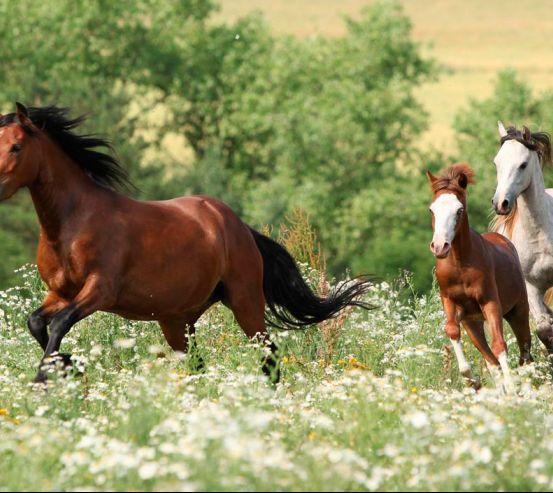 Фотообои Лошади на лугу 8428