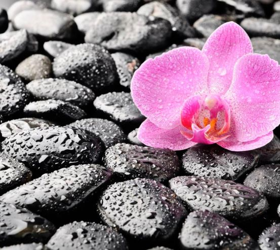 Фотообои Орхидея, роса, камни 7095