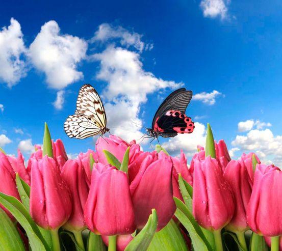 Фотообои Бабочки и розовые тюльпаны 10354