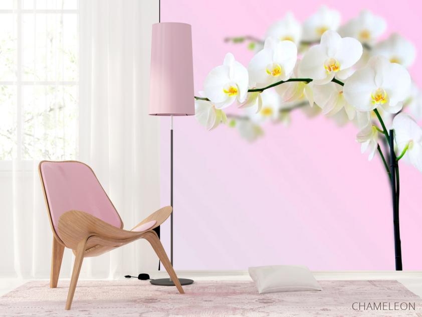 Фотообои Веточка орхидей белоснежных - 4