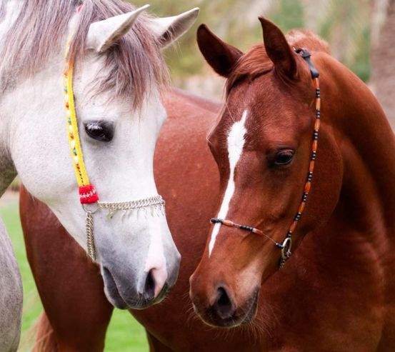 Фотообои Пара коней 11510