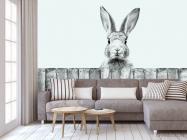 Фотообои Милый кролик - 3