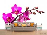 Фотообои Веточка розовой орхидеи - 1