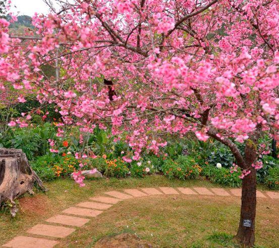 Фотообои Цветущие вишни 12860