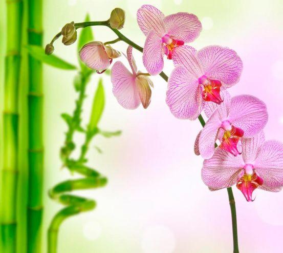 Фотообои Орхидеи и бамбук 3159