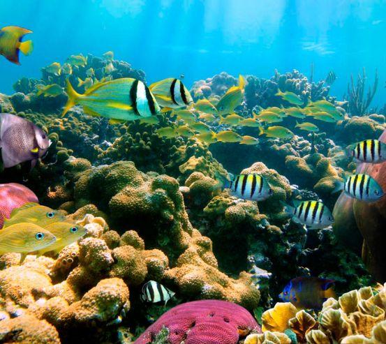 Фотообои Косяк рыбок 6622