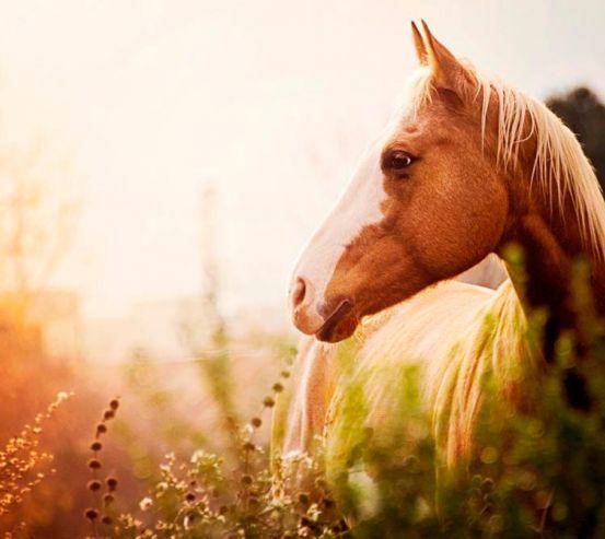 Фотообои Лошадь среди трав 7360