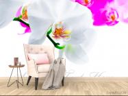 Фотообои Бело-розовые орхидеи - 4