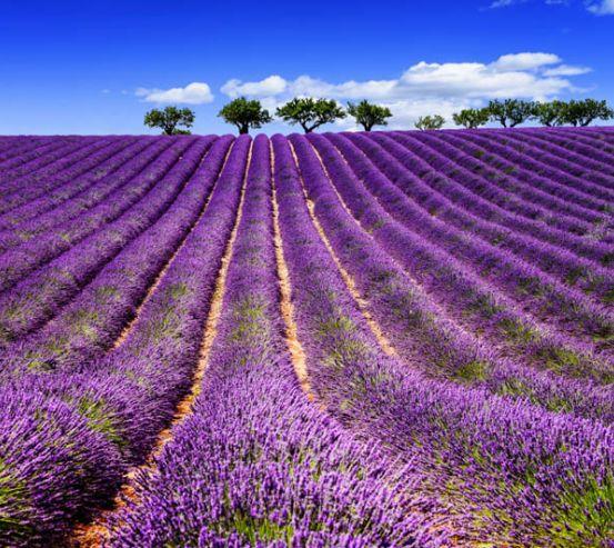 Фотообои цветы в поле 26885