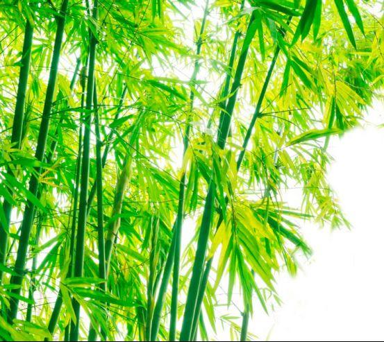 Фотообои Детки, бамбук 9559