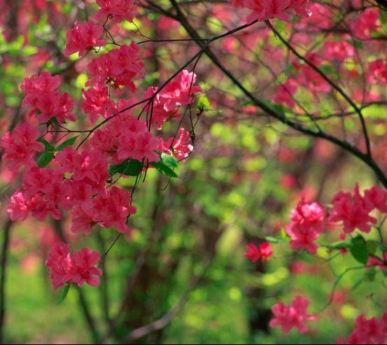 Фотообои Цветущий кипарис 1102