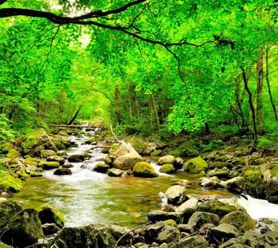 Фотообои Ручей, деревья 2860