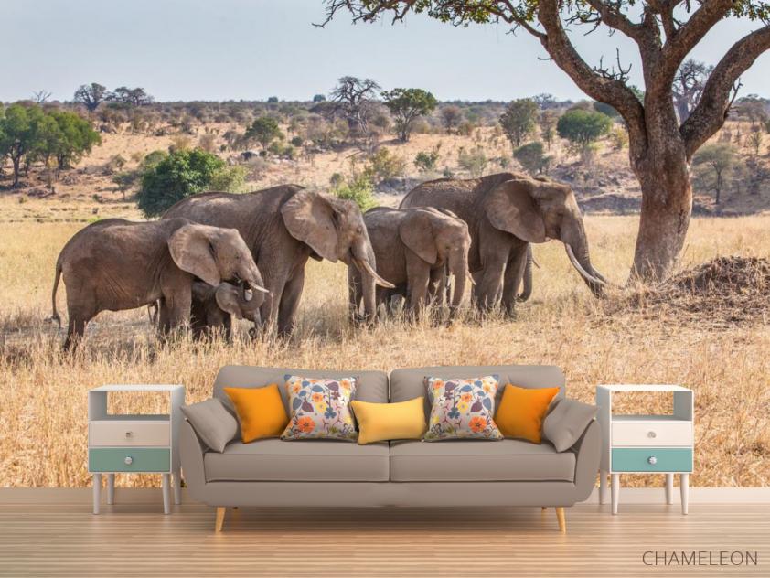 Фотообои слоны и слонята - 1