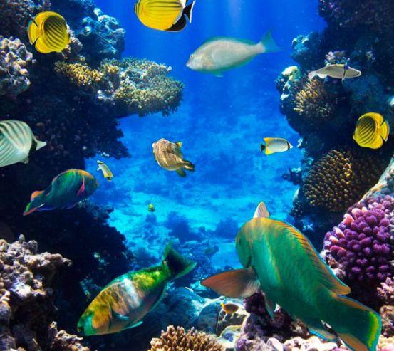 Фотообои Косяк рыбок в море 2203