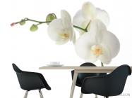 Фотообои Орхидея белоснежная распустилась - 1