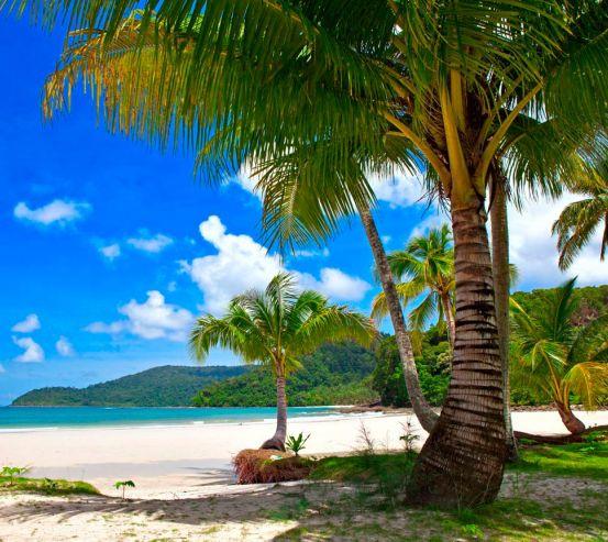 Фотообои Пальмы в тени 9367