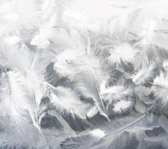 Фотошпалери повітряні білі пір'я 29319