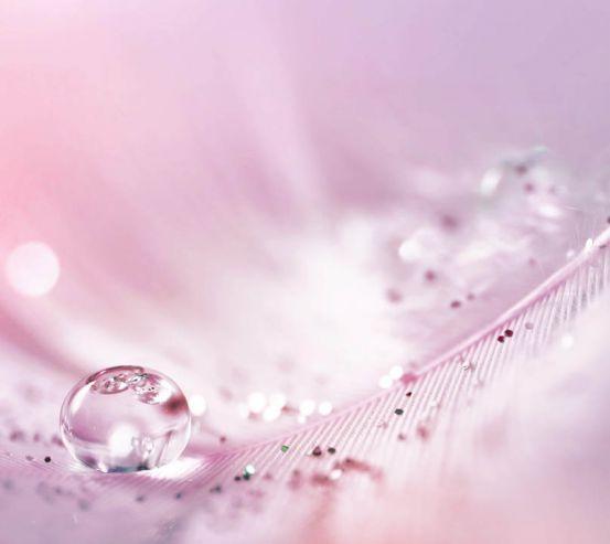 Фотообои Перо с росой на розовом фоне 22967