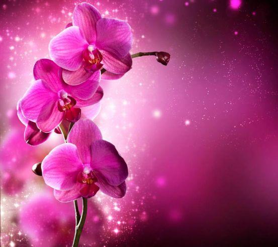 Фотообои Малиновые орхидеи веткой 10714