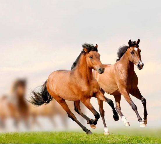 Фотообои Скачущие кони 7929