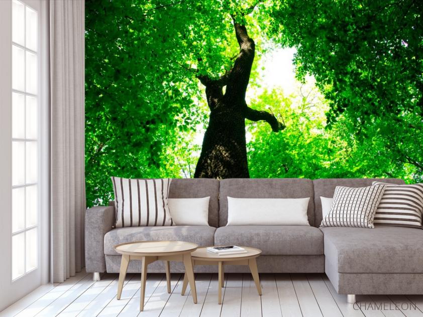 Фотообои Большое,зеленое дерево - 3
