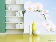 Фотообои Ветка белоснежных орхидей - 3