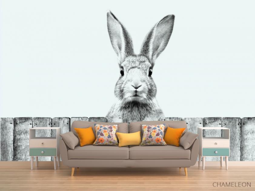 Фотообои Милый кролик - 1
