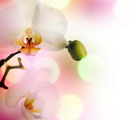 Фотообои Орхидеи цветут 1403