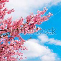 Розовые деревья