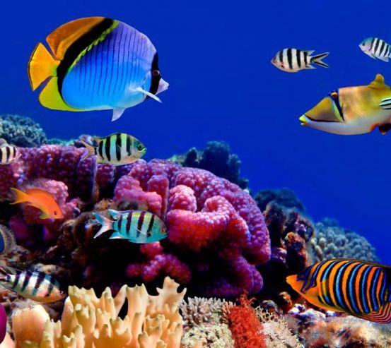 Фотообои На дне морском 3054