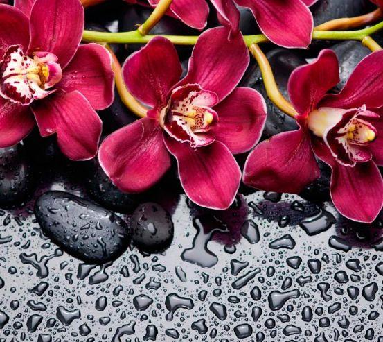 Фотообои Цветы на камнях 13474