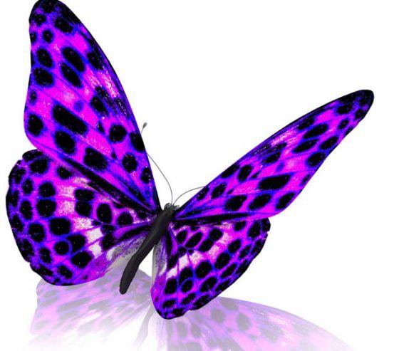 Фотообои красивая бабочка 25478