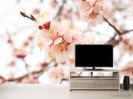 Фотообои Цветущий абрикос весной - 2