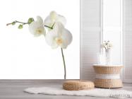 Фотообои Орхидея белоснежная распустилась - 2