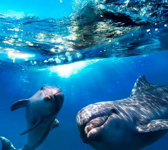 Фотообои Неунывающие дельфины 6970