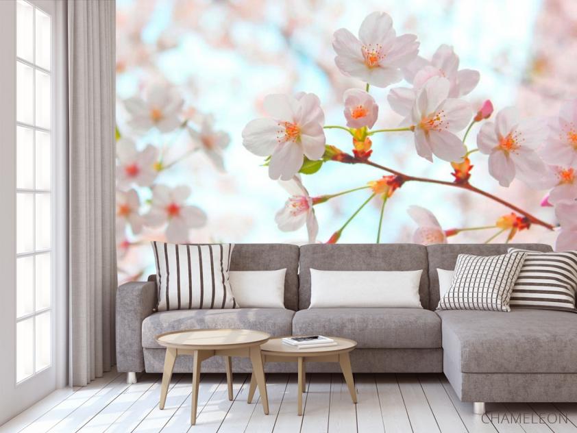 Фотообои Цветет абрикос весной - 3