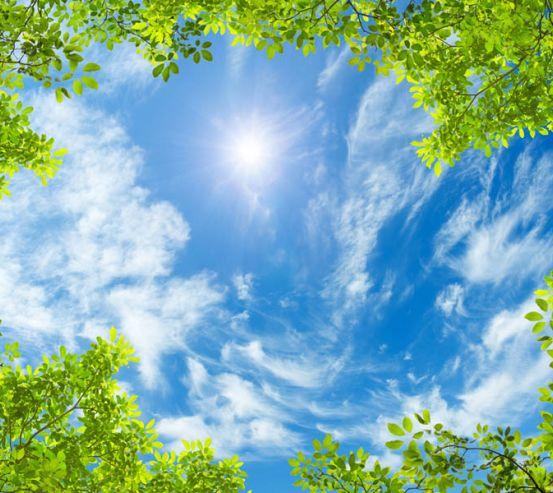 Фотообои Ветви и небо потолок 22511