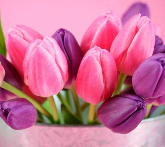 Фотообои Розовые и фиолетовые тюльпаны 1132