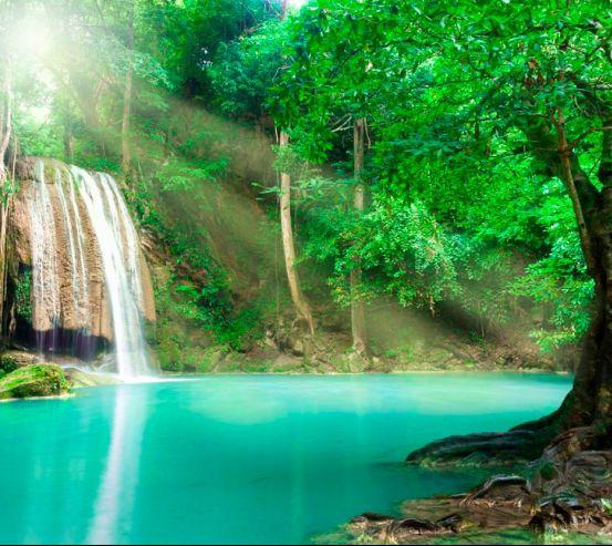 Фотообои Спокойная вода, лес 13383