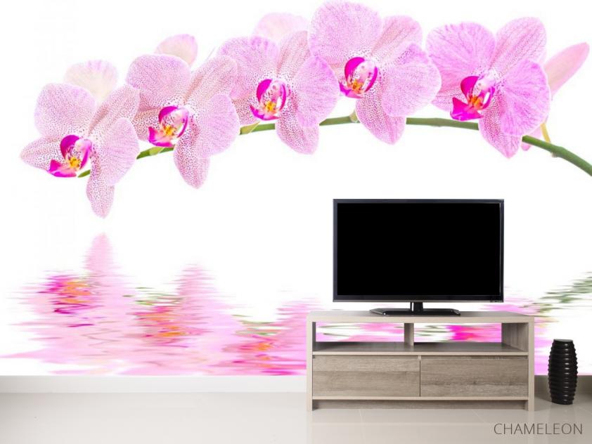 Фотообои Отражение орхидей - 2