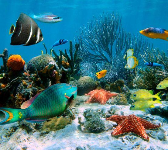 Фотообои Морские рыбы 6972