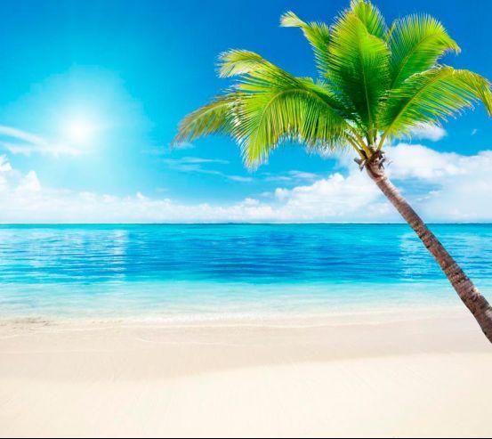 Фотообои Пляж, пальма, штиль 5002