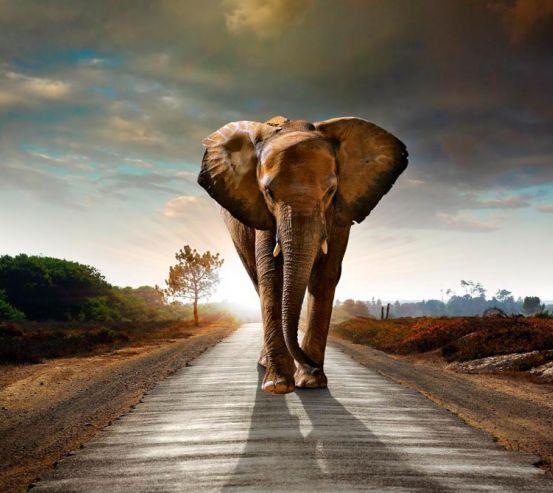 Фотообои Слон на дороге 3704
